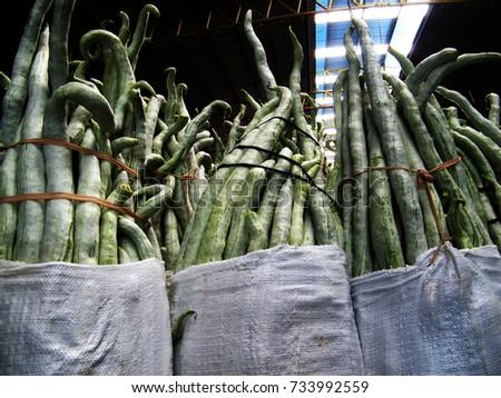 Snake gourd in market. Trichosanthes cucumerina #733992559