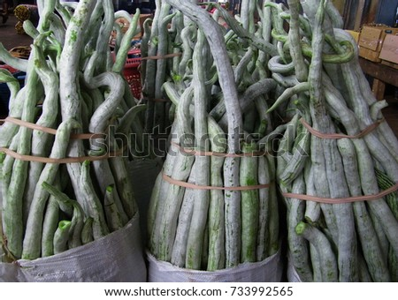 Snake gourd in market. Trichosanthes cucumerina #733992565