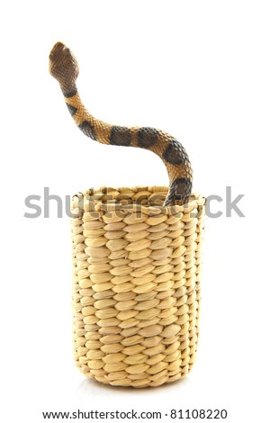 Snake in basket isolated on a white background
