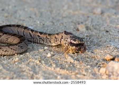 Snake in kruger national park south africa
