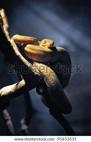 Snake on a branch on dark background