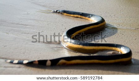 Snake on the beach #589192784