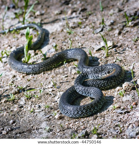 Snake on the ground - stock photo