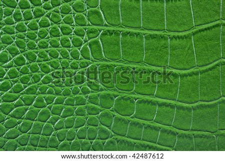Snake reptile alligator green textured  leather detail closeup.
