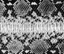 Snake skin background