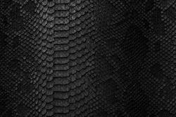 Snake skin background. Close up.