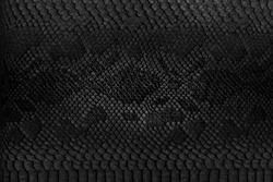 Snake skin background. Close up.