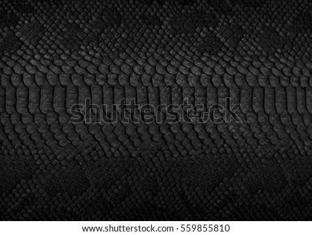 Snake skin background. Close up. #559855810