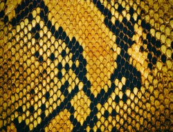 Snake skin background. Reptile texture