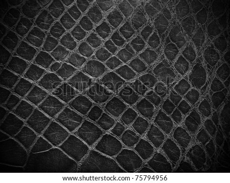 snake skin black and white close up