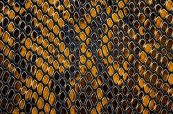 Snake skin pattern background. Yellow color.