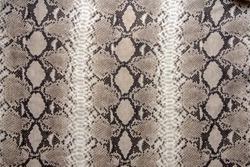 Snake skin pattern reptile texture