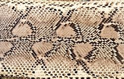 snake skin python