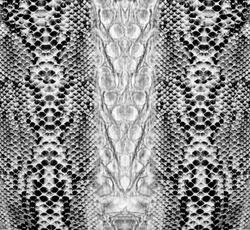 Snake skin , reptile