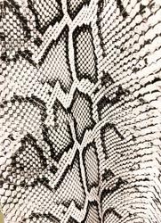 Snake skin seamless pattern. Snakeskin animal texture. Fashion clothes textile