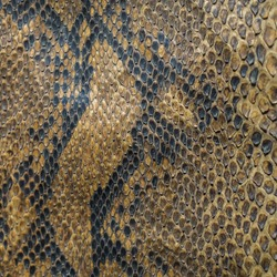 Snake skin texture and background