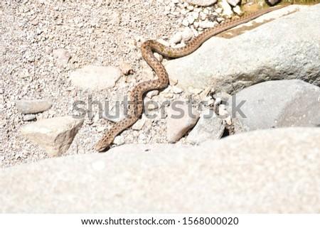 Snake specimen in juvenile stage #1568000020