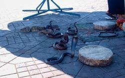 Snakes in El-Fnaa square in Marrakesh