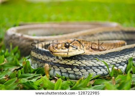 Snakes, venomous reptiles