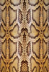 Snakeskin Leather Fashion