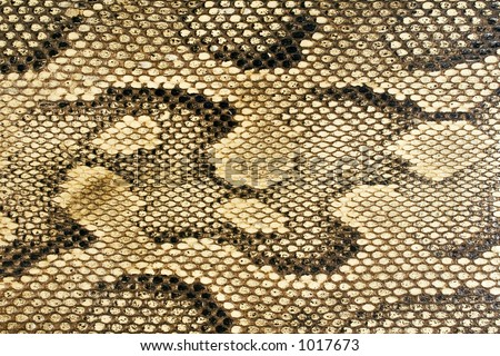Snakeskin-Texture