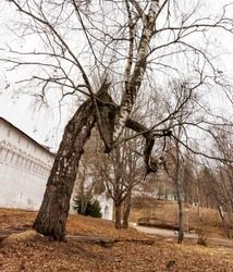 Snapshot with a view of a crooked tree next to the wall of the monastery. A broken, twisted Birch tree. Broken tree branches. Demonic, mystical strange and scary place.