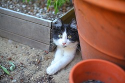 Sneaky kitten in the garden.