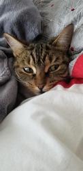 sneaky kitty hiding in her blanket