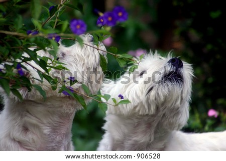 Sniffing dogs