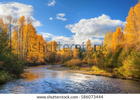 Snoqualmie River flows through deciduous forest under blue skies during peak of fall color season in the Cascade Mountains of Washington state