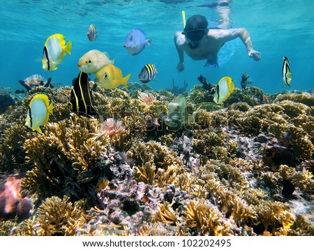 Snorkeling man underwater on a coral reef with tropical fish front of him