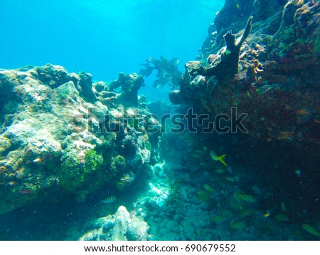 Snorkelling in Key West - Florida Marine Sanctuary  #690679552