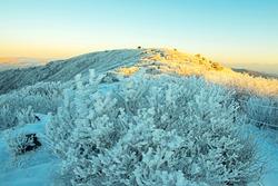 Snow and hoarfrost on trees on the peak Taebaeksan Mountain with sunshine near Taebaek-si, South Korea