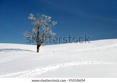 snow and lone tree in winter season