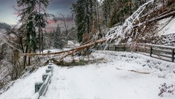 Snow blockages. The trees broke under the weight of wet snow and blocked the road. Danger of sudden climate change on the Dolomites. Winter view on fallen trees on cars under snow.