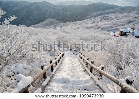 Stock Photo Snow bridge at Deogyusan Mountain National Park covered with snow in winter,South Korea.Snow flower.