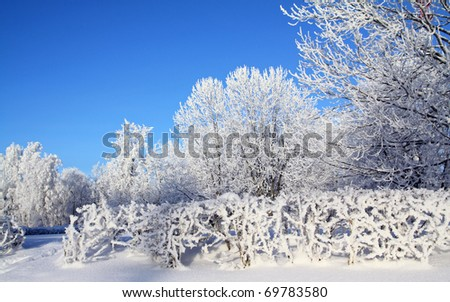 snow bushes in winter park