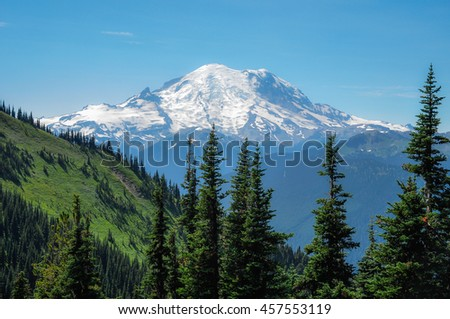 Snow capped Mount Rainier on a cloudless day with forest of pine trees in the foreground