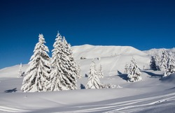 Snow capped pine trees, covered by heavy snow against blue sky a little wooden house , Dolomites. Concept of peace and traquility. Winter scene.