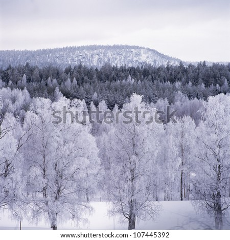 Snow-clad trees by mountain