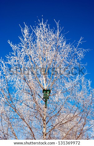 Snow covered birdhouse on a birch tree