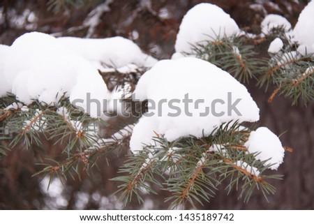 snow-covered branch of a fir, needles of a fir #1435189742