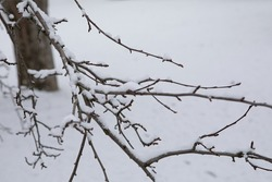 snow covered branches after a wisconsin spring snowfall