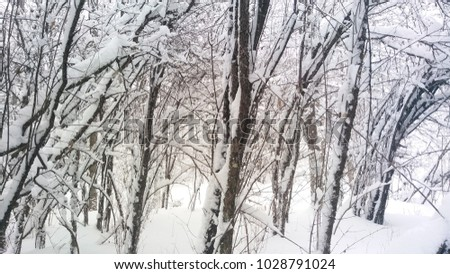 snow covered branches and trees ...