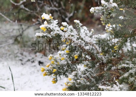 snow covered bushes #1334812223