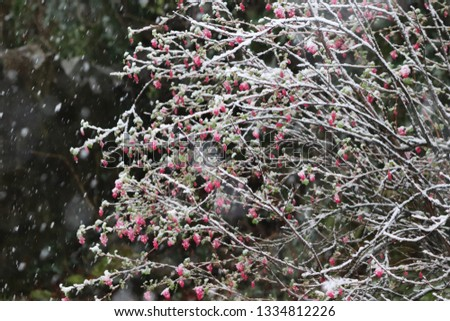 snow covered bushes #1334812226