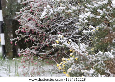 snow covered bushes #1334812229