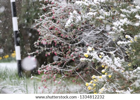 snow covered bushes #1334812232