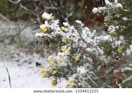 snow covered bushes #1334812235