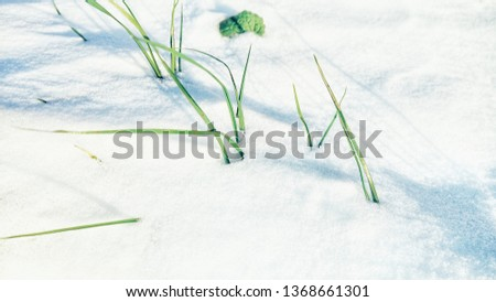 snow covered fields #1368661301